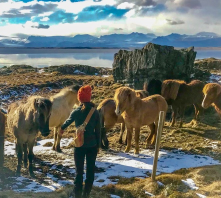 Eastern Iceland Horses