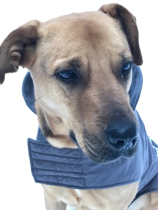 Shanti Dog Annette Lake WA State