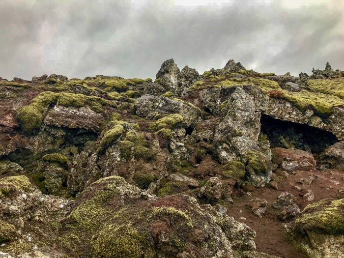 Iceland Moss LIchen Covered Rocks
